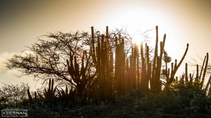 Curacao moments – Mondi